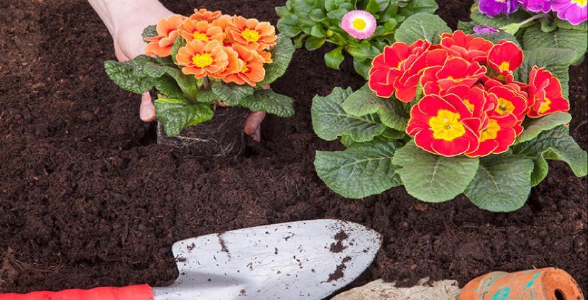 çiçek ve bitki dikme, bahçe peyzaj uygulama