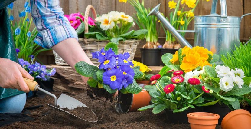 bahçe bakımı düzenleme yapan firmalar