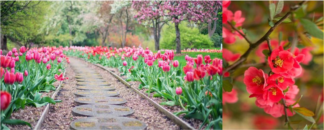 bahçe düzenleme, bahçe yürüyüş yolları yapımı