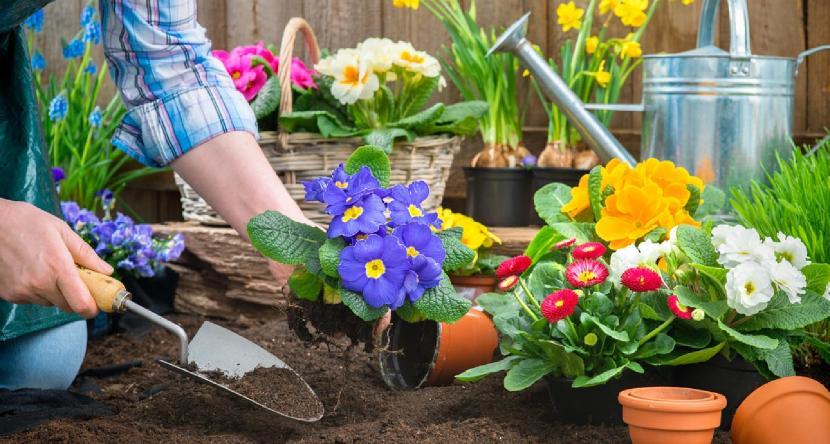 bahçe peyzaj bahçıvan çiçek dikme budama