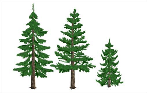 çam ağacı budama zamanları