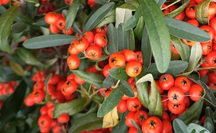 Türkiyenin bitki örtüsü