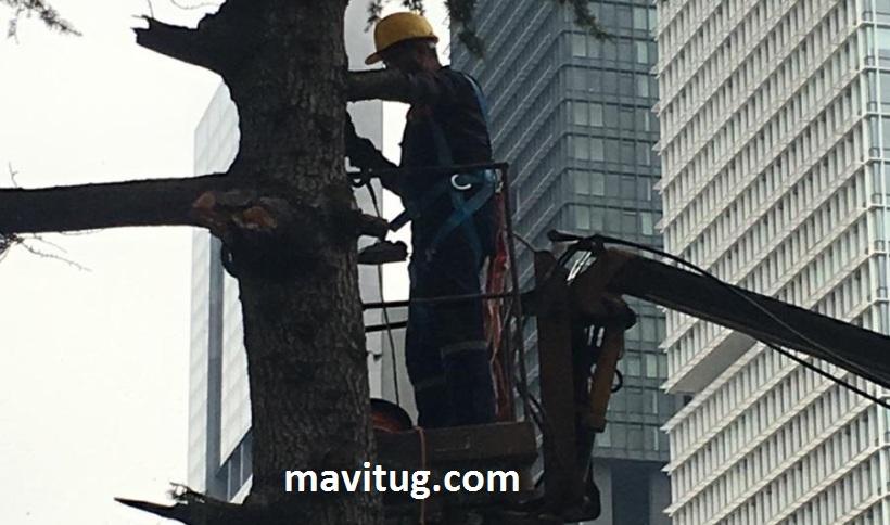 ağaç budama zamanı takvimi