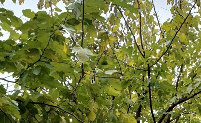 ağaçlar türkiyede