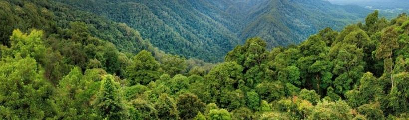 İzmirde yetişen ağaç çeşitleri