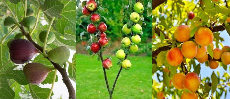 meyve ağaçları çeşitleri nelerdir