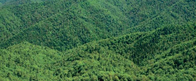 Türkiye'nin doğal bitki örtüsü ve dağılışı