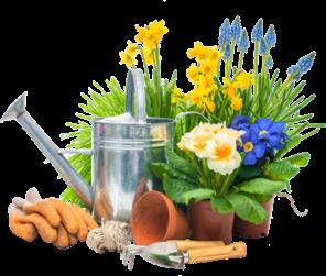 çiçekler, güller, bitkiler hakkında bilgi
