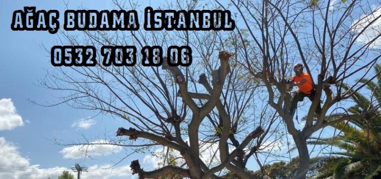 Ağaç budama zamanı hangi ay 2020, 2020 yılında ağaç budama zamanı hangi aylarda yapılır