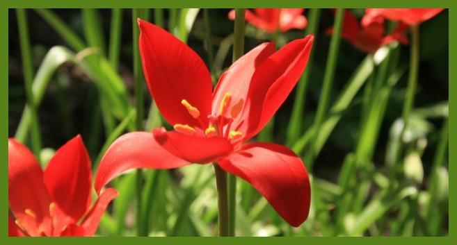 Türkiye'de yetişen endemik çiçek türleri