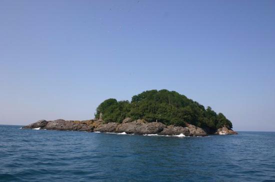 giresun-ağaçları-listesi