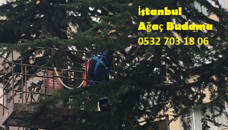 İstanbul Ağaç Budama