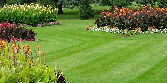 İstanbul bahçe bakımı firmaları