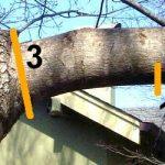 Ağaç budama ne zaman