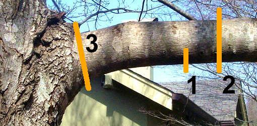 agaç budama ne zaman, Ağaç budama ayları, Ağaç budama hangi ayda yapılır, ağaç budamaları, ağaç budama ayları