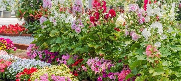 Peyzaj Alanında Kullanılan Dış Mekan Bitkileri, Dış Mekan Bitki türleri, Peyzaj alanında kullanılan bitkiler, Bahçe Düzenlemede Dış Mekan Bitki Türleri, Peyzaj Yapılırken Kullanılan Bitki Türleri