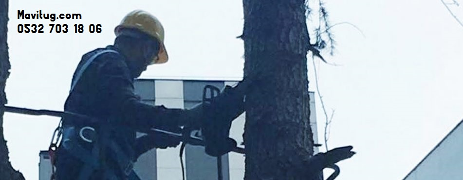 istanbulda ağaç budama firması