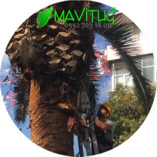 Palmiye ağacı budama İstanbul