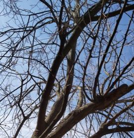 ağaç kesimi
