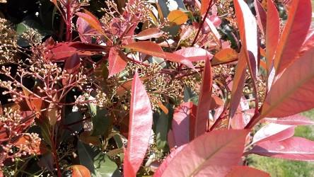 dış mekan süs bitki çeşitleri