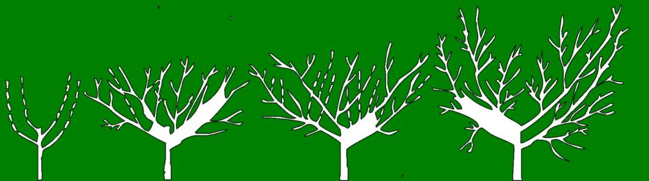 erik ağaçı budama yöntemi