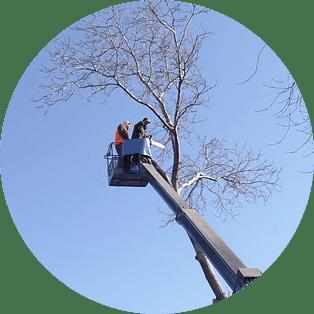 ağaç budama ustası telefonları