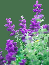 adan zye mor renkli çiçekler