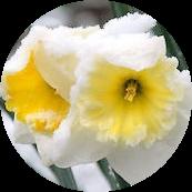 Çiçekler Donmasın Diye Ne yapılır