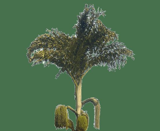 Palmiye türleri, Türkiyedeki palmiye türleri, Palmiye fiyatları 10 metre, Palmiye çeşitleri ve isim listesi, Saksı palmiye türleri nelerdir, Fenix palmiye, Salon palmiye çeşitleri, Bodur Palmiye türleri, palmiye ağacı isimleri, Türkiye'de yetişen palmiye çeşitleri,