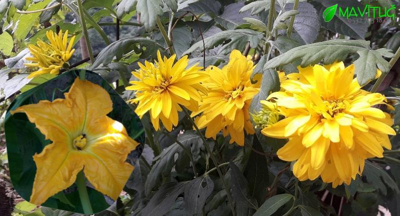 adan zye sarı çiçek açan bitki isimleri