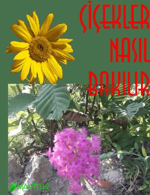 çiçek bakımları nasıl yapılır