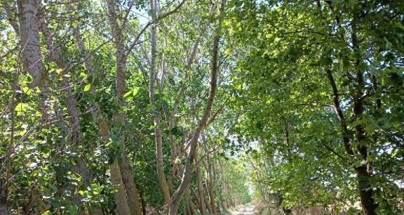 en hızlı büyüyen ağaç türleri nelerdir