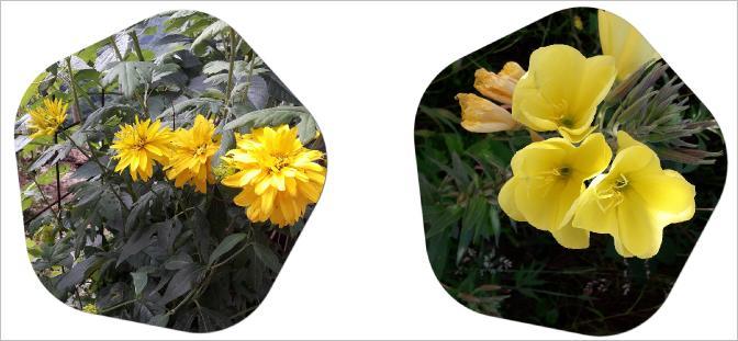 sarı çiçek açan bitki isimleri